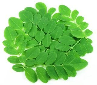 Moringa, a Marvel of a Tree